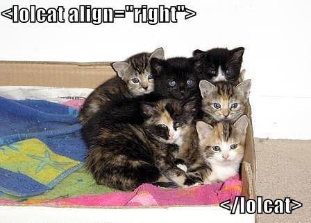 html-cat-content